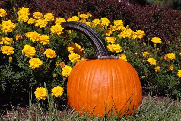 Benchmark F1 Pumpkin