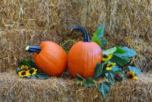 Prudence F1 Pumpkin