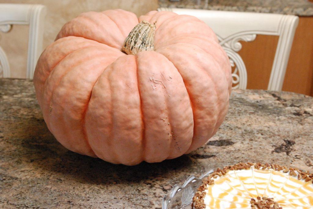 Rascal F1 Pumpkin