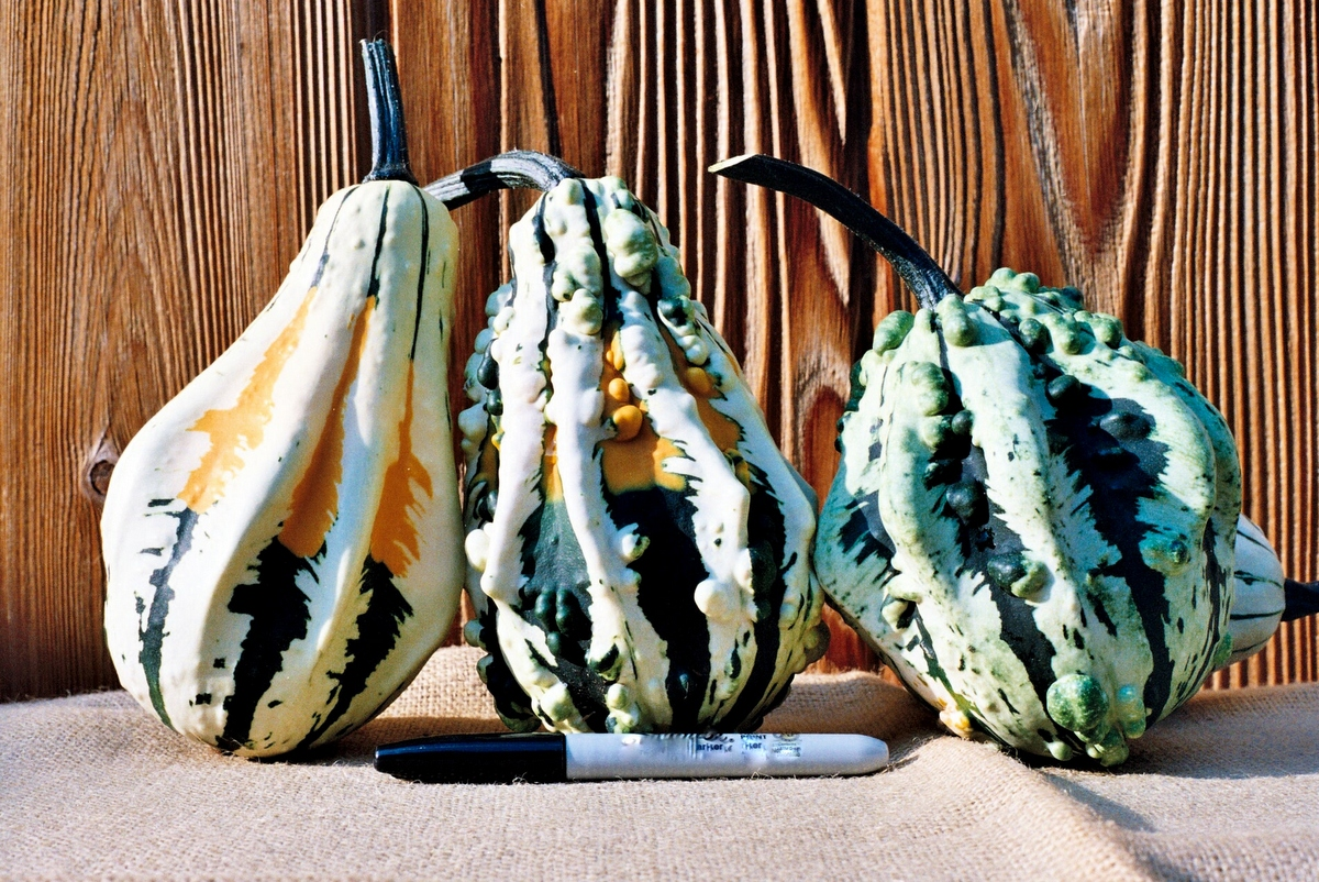 Super Wings Large F1 Gourd