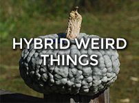 Hybrid Weird Things