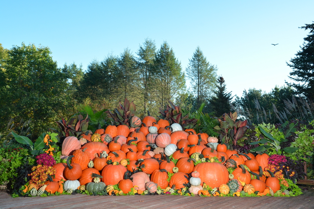 2nd Annual Pumpkin Display, Outstanding Seed Company, October 2017