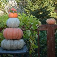 PMR Pumpkins, Outstanding Seed Hybrids